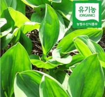 유기농 산마늘 500g