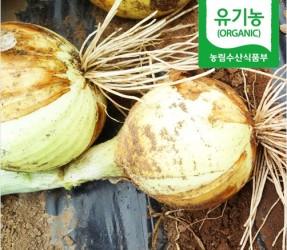 햇 유기농 양파 5kg